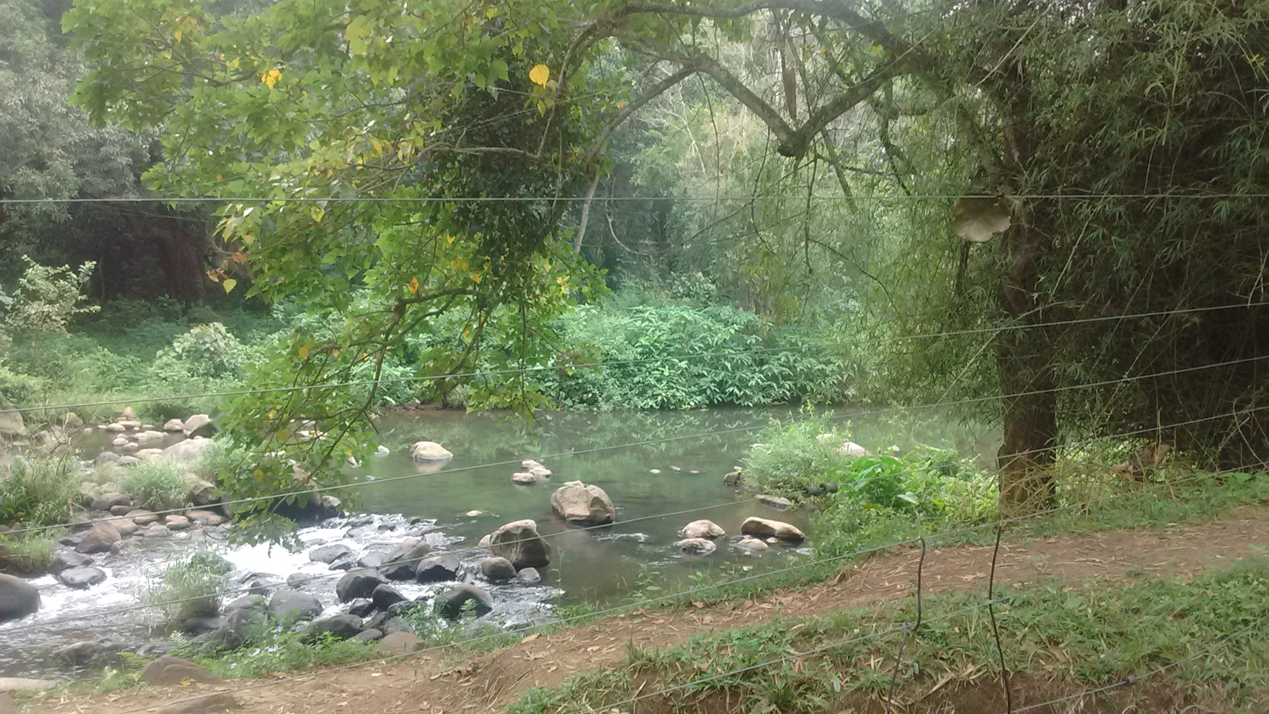 A river dividing a plantation in Gudalur from the elephant camp at Mudumalai Forest