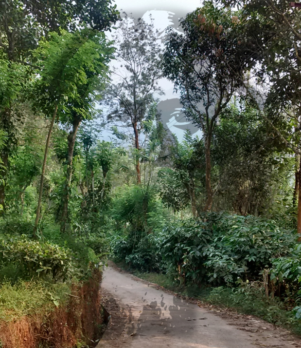 How Tagore Bought Me Free Lunch In The Nilgiris