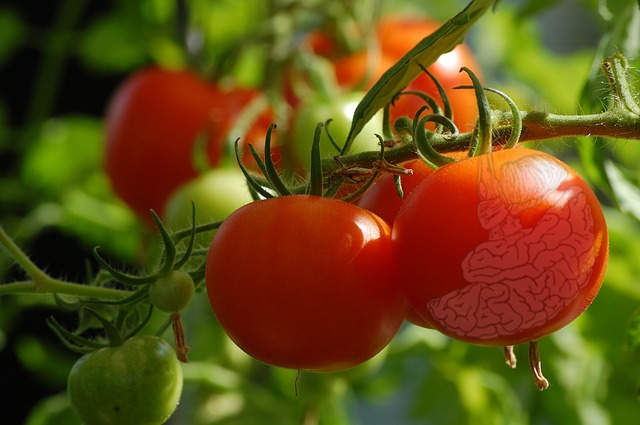 Ripe Tomatoes And The Mind
