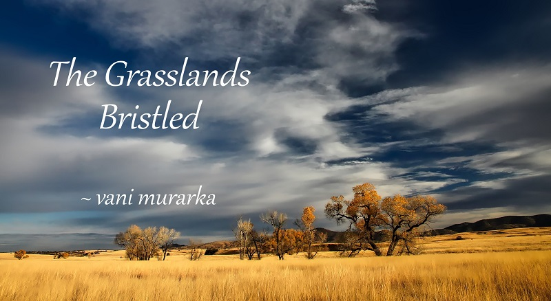 Fiction continued: The Grasslands Bristled